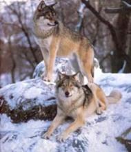 www.djurskydd.org
