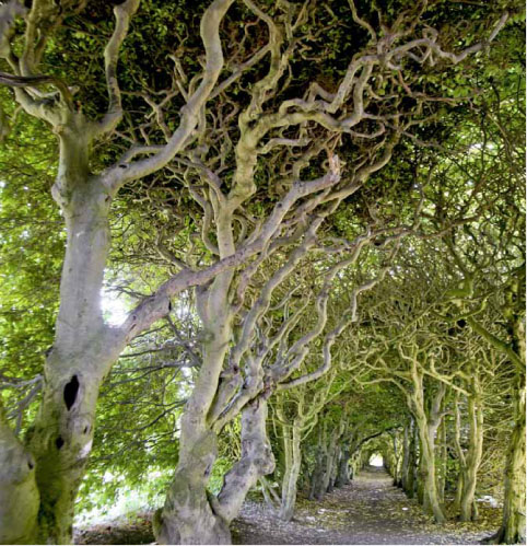 älskadeträd