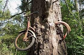träd cykel