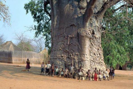 trädStörsta