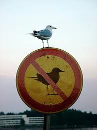 fågelskylt