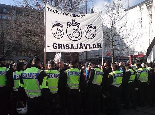 gris_polis_
