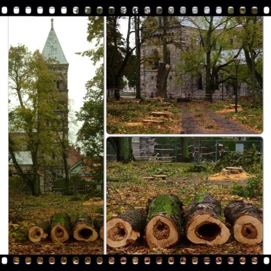 Trädfälle-i-Lundagård