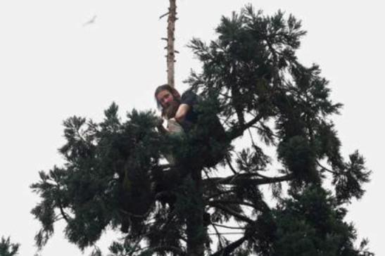 mannen i trädet