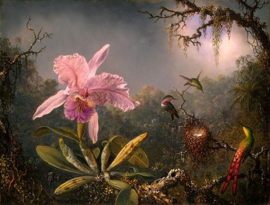 cattleya-orchid-and-three-hummingbirds-1871.jpg!Large