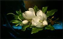 giant-magnolias-on-a-blue-velvet-cloth-1890.jpg!PinterestSmall.jpg